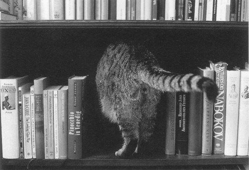 No one said cats would be discreet in all their bookshelfies.