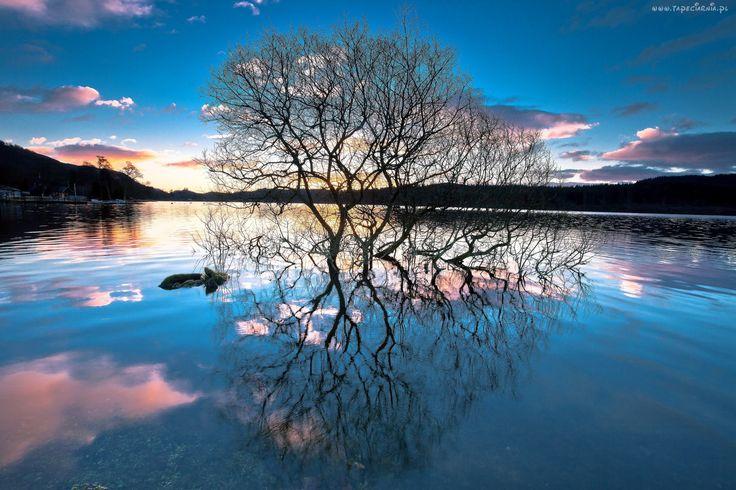 Jezioro, Wschód, Słońca, Drzewo, Odbicie