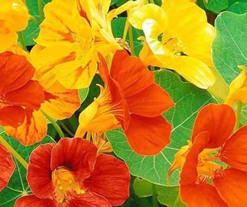 Полезные свойства цветка…