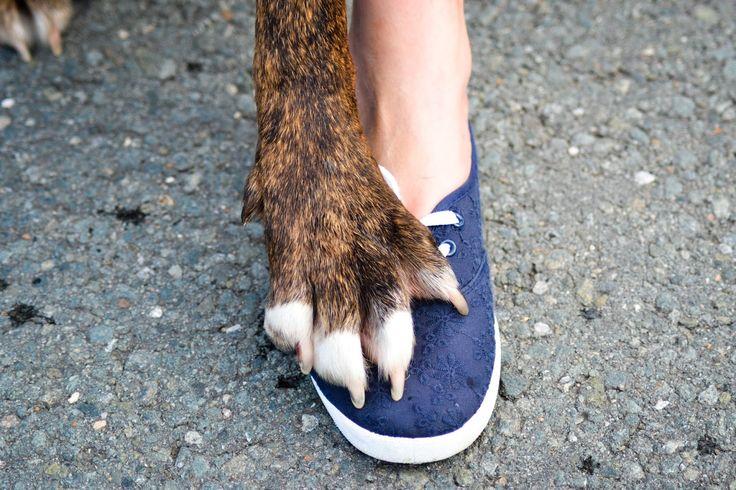Die Hundefrau