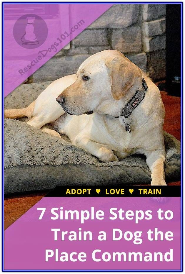 Helpful Hints For Teaching Your Puppy To Listen Training Your Dog Dog Training Easiest Dogs To Train