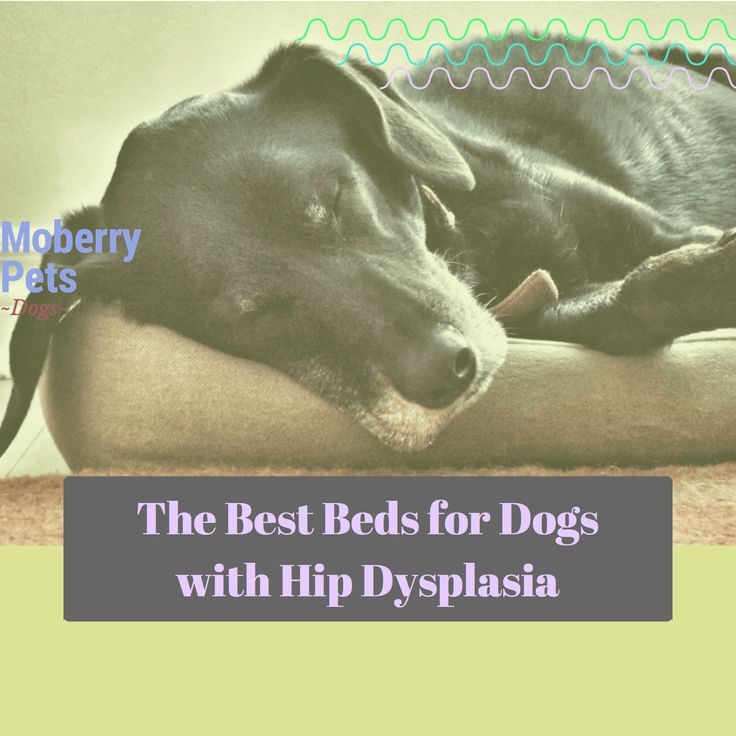 Best Beds for Dogs With Hip Dysplasia - MoberryPets.com