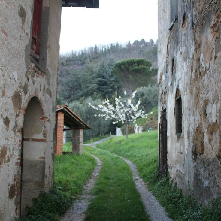 Old walls and spring blossoms in Tuscany #startthedaywithsomethingbeautiful