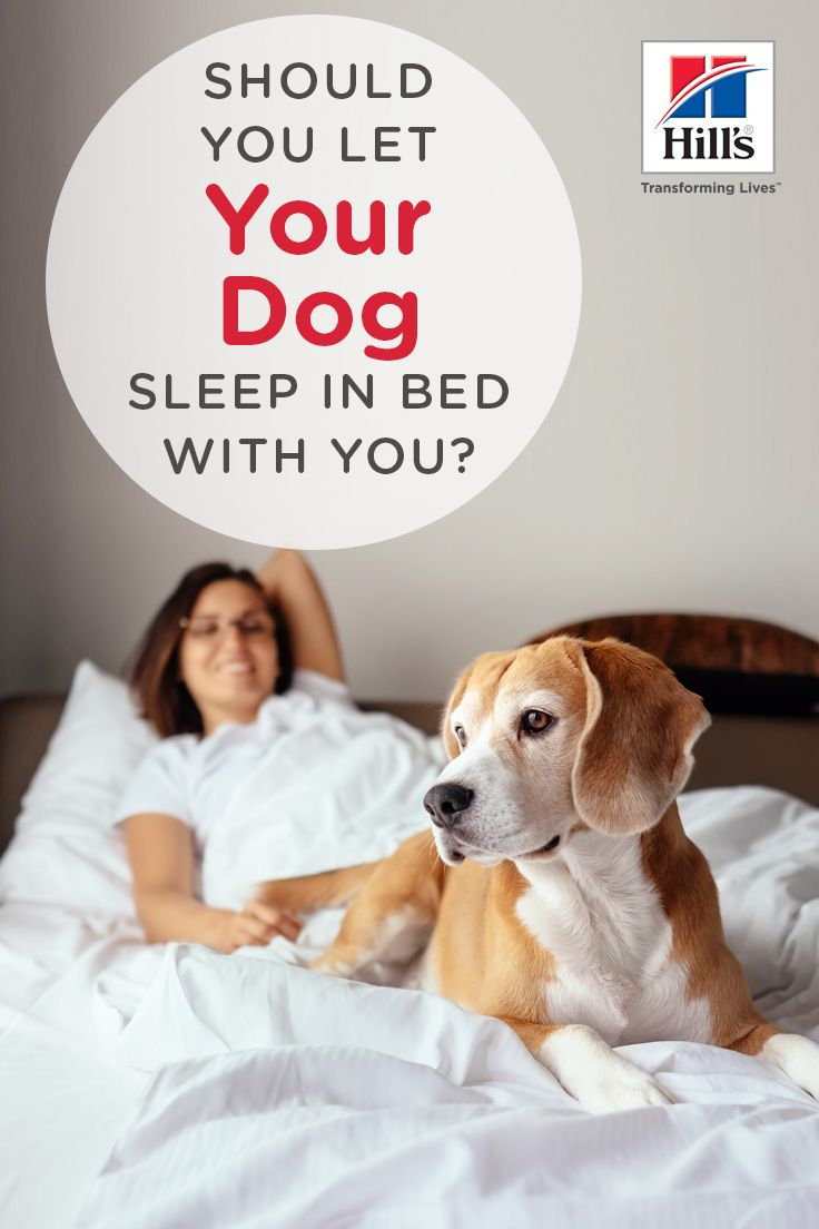 Should You Let Your Dog Sleep In Your Bed Sleeping Dogs Dog