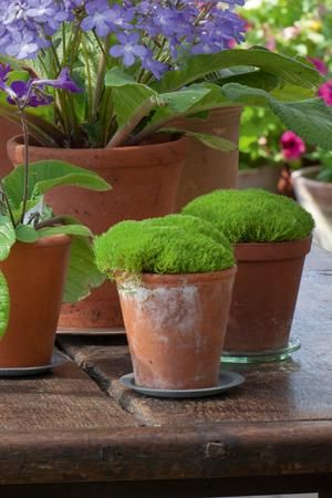 Find the very best container plants to fill the garden patio or conservatory with colour