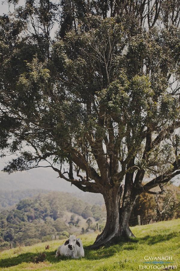 Maleny Manor House wedding. Sunshine Coast Hinterland QLD. Image: Cavanagh Photography http://cavanaghphotography.com.au