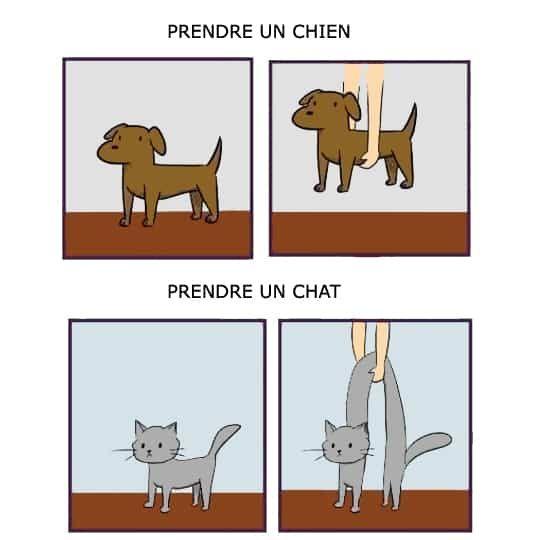 prendre un chat