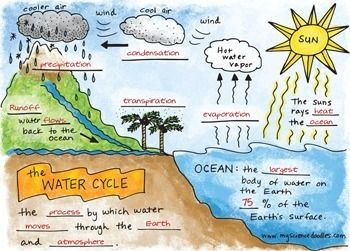 "FREE  adorable ""Water Cycle Foldable"" plus Vocabulary Sheets, FREE by Science Doodles!"
