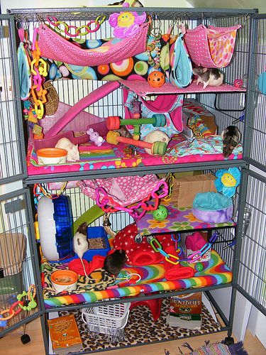 Stuffed rat cage.Will nto do it so pink tho xD