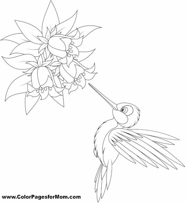 Coloring Pages Of Le Blossoms : Pin by damaged unwanted wife on color art therapy