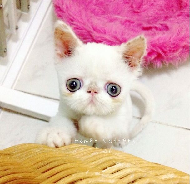 24 best images about chat gros yeux on pinterest cats - Animaux a gros yeux ...