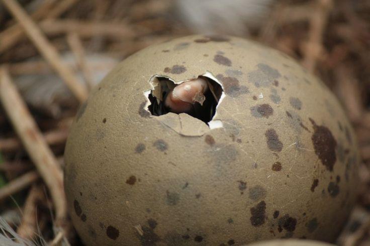 1210 best images about Animals Bird Nest / Vogelnest on ...