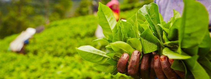 Økologisk og bærekraftig