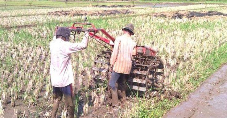 Setelah Lahan Pertanian Menyusut, Kini Sukabumi Langka Petani
