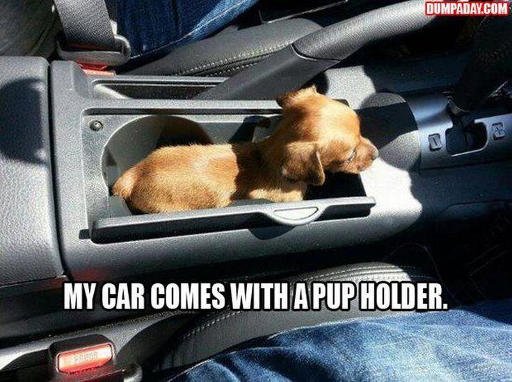 Top Funny pics (02:03:46 PM, Sunday 20, November 2016 PST) – 64 pics