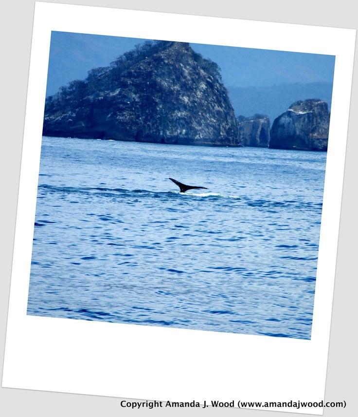 Whale tail in Mexico, near Puerto Vallarta.