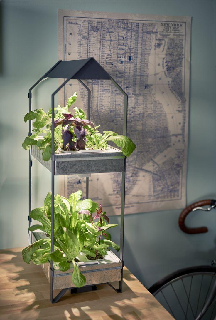 Doordat je het zelf kweekt, is je groente altijd vers. Lokaler en duurzamer wordt het niet. | #STUDIObyIKEA #IKEA #IKEAnl #groen #moestuin #kweken #groeien #tips #indoor #gardening #duurzaam #DagvandeDuurzaamheid