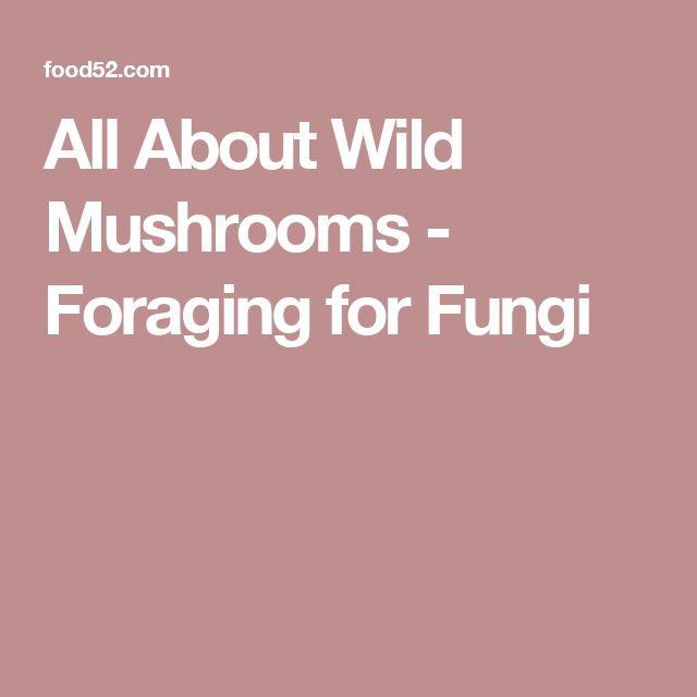 17 best ideas about wild mushrooms on pinterest fern forest magic forest and mushroom fungi - Wild mushrooms business ideas ...