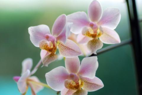 Jak přesazovat orchidej | JakTak.cz