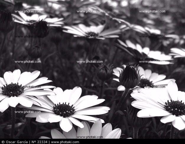 Flores y Más,