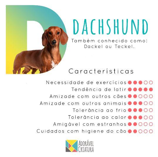 """Valente, teimoso e independente. Essas características definem o Dachshund, o popular """"salsichinha"""".  Quer que a gente pesquise sobre a raça do seu bichinho? Sugira aqui nos comentários.  #raçasdeaaz #salsichinha #dachshund #instadog #dogoftheday #petlover #ilovemydog #dog #cachorro #adoravelcriatura"""