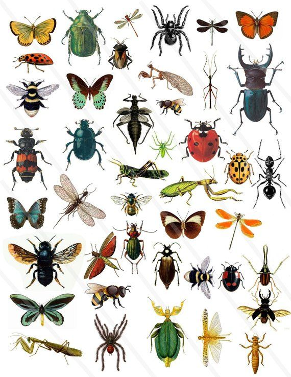 Junk Journal Collage Instant Download for Digital Scrapbooking Vintage Insect clipart
