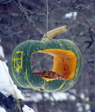 Temporary bird feeder. Great seasonal idea to reuse squash and pumpkins.