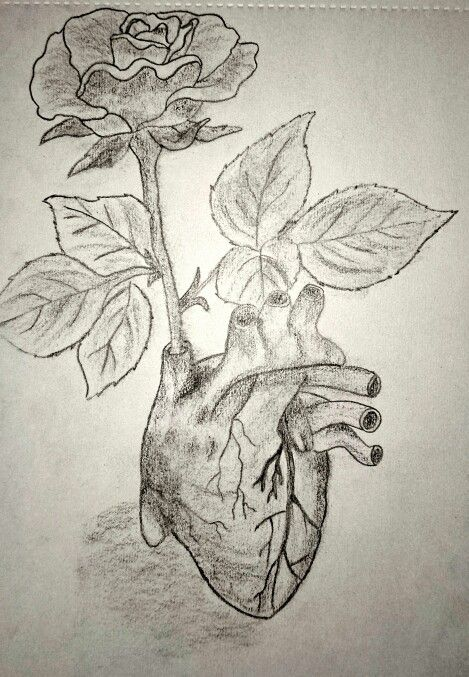 #drawing #love growing #rose in heart