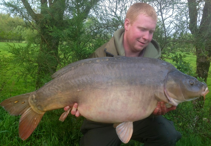 """Dynamite Baits' man Duncan with big mirror Patch in May at 44lb 7oz. Patch was last caught by myself in mid March at 43lbs so he's been having a little munch! Taken on a fluoro Crave popup fished on a 2"""" choddy. #carpfishing"""