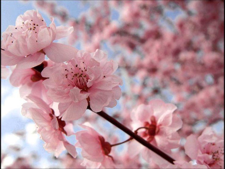 Sakura - Ikimono Gakari (Lyrics)