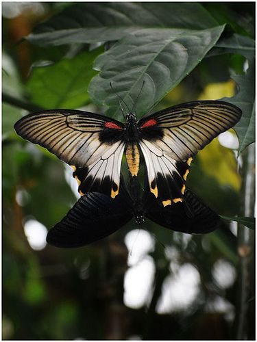 For Butterfly Love that Lasts ... have a look at the board http://www.pinterest.com/FannyRitterMilz/a-star-is-born/