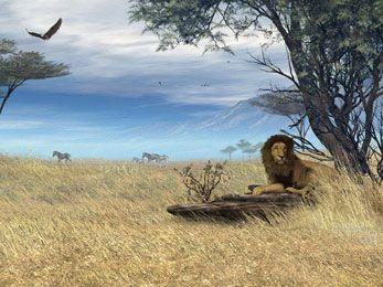 Information about Savannah Safari Animated screensavers