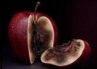 świat jace waylanda: Zgniłe owoce i czterolistna kończynka.