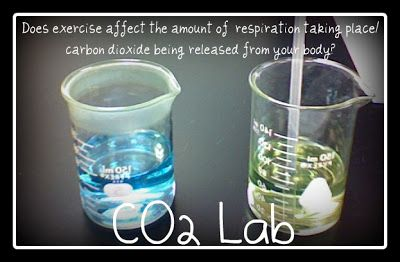 LAB REPORT  CO2     Today's lab is one of my faves!!    It was their first time seeing an indicator.    AND  the lab really works.        P...
