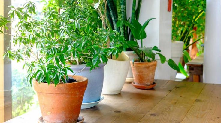9 Easy Houseplants That Are Beneficial To Your Health