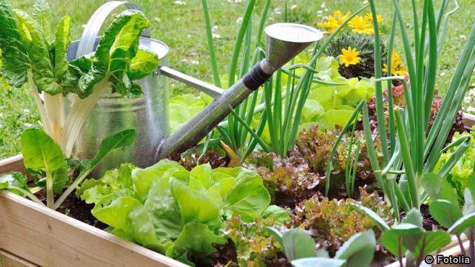 家庭菜園の始め方 初心者さん歓迎 簡単年間プラン で美味しい野菜を