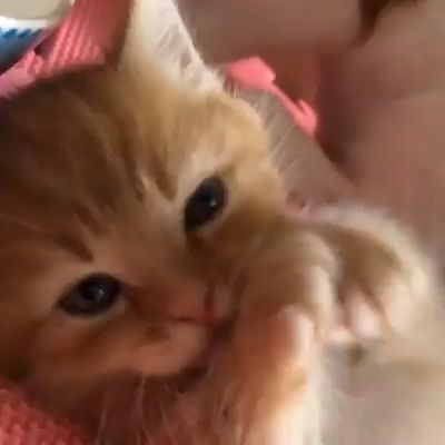 Katzen … Schau dir meine Pfoten an, ich habe alle von mir gereinigt …   – ♡Cats♡