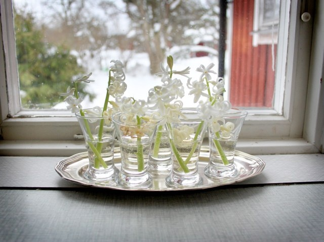 Skåla i hyacintsnaps! Blomarrangemang. Flower arrangement. Hyacinth schnaps.