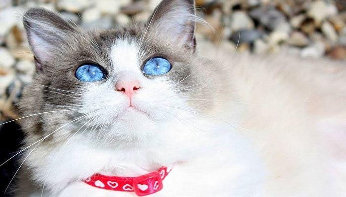 Problemas oculares en gatos. 5 de las más comunes.