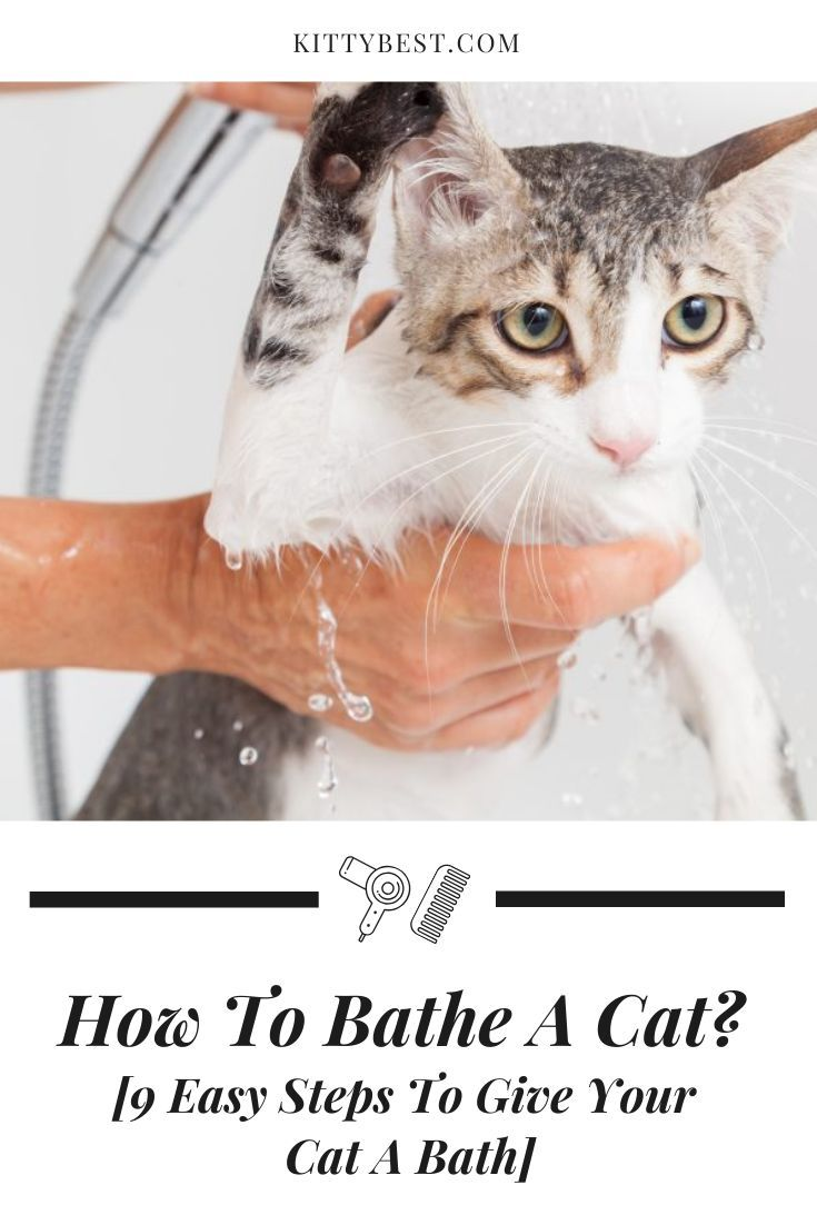 How To Bathe A Cat 9 Easy Steps To Give Your Cat A Bath Cats Cat Toilet Training Cat Care