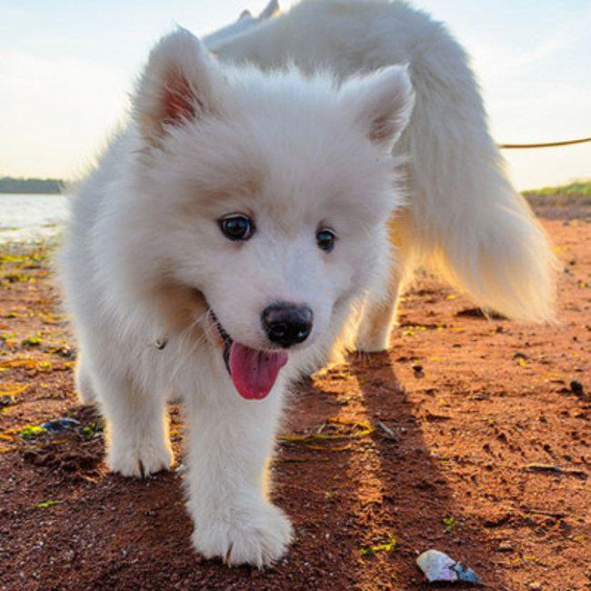 So goldig: Diese 15 Welpen-Fotos bringen unser Herz zum Schmelzen www.gofeminin.de/gespraechsstoff/flauschige-welpen-s1225125.html #Hunde #Puppies