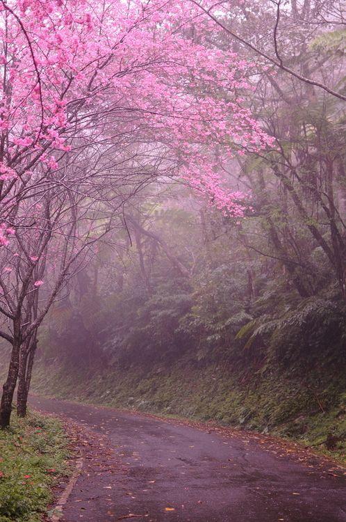 #CherryBlossom Lane in Kyoto, Japan  photo via myrtle