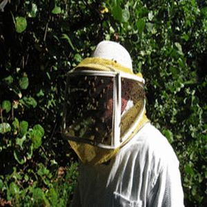 The importance of a live Bee Removal Boca Raton Florida and other alternatives such as getting a bee keeper doing the task yourself may be the best. Bee Removal Boca Raton Florida to do a live bee removal: Cost, Feasibility, and insect preservation the benefits of a live bee removal are best.Visit our site https://plus.google.com/106924397519534321663/about for more information on Bee Removal Boca Raton Florida