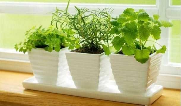 50 plantas que atraen energias positivas segun la sabiduria ancestral Cada planta tiene una energía particular que puede convertirse en un medio eficaz...