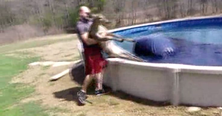 Man Saves A Deer From Pool, But Watch What His Wife Does When It Lays Freezing O… – Viral Buzz