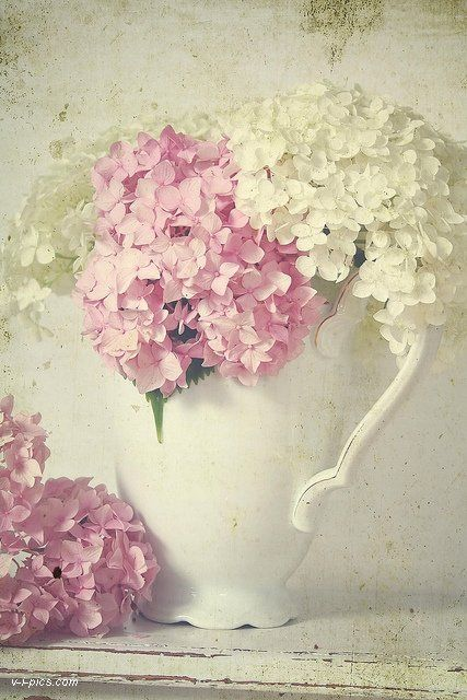 flowers: Photo Studio, Vintage, Shabby Chic, Flower Arrangements, Pink, Hydrangea, Flowers, White Hydrangeas, White Pitcher
