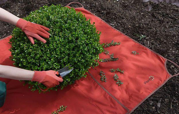 Buchsbaum schneiden | Baumschnitt | Bild 4 | selbst.de Im Prinzip reicht beim Buchsbaum schneiden ein altes Bettlaken, das Sie unter Baum oder Hecke legen, um den feinen Laubschnitt aufzufangen
