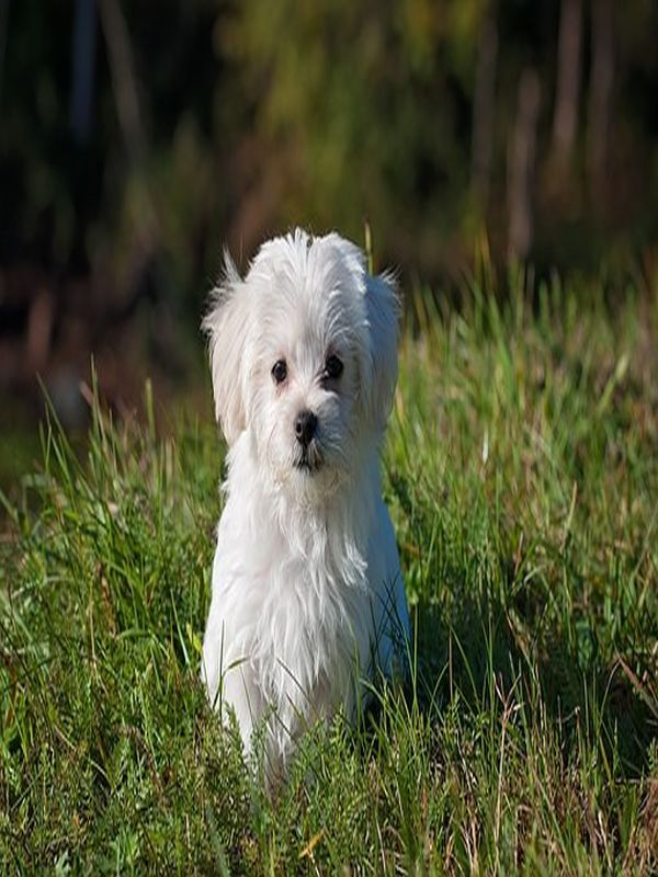 Dog Training Tips For Biting Fluffy Dogs Cute Dogs Dog Breeds