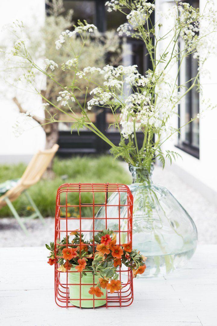 Mix en match verschillende planten voor een kleurrijk effect in uw tuin! #moreismore