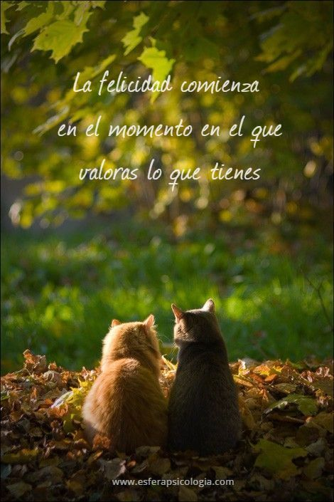 #felicidad #gatos